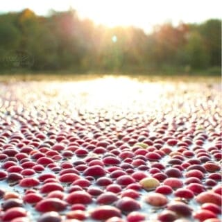 An artistic picture of a cranberry bog with the sun setting over the tree line.