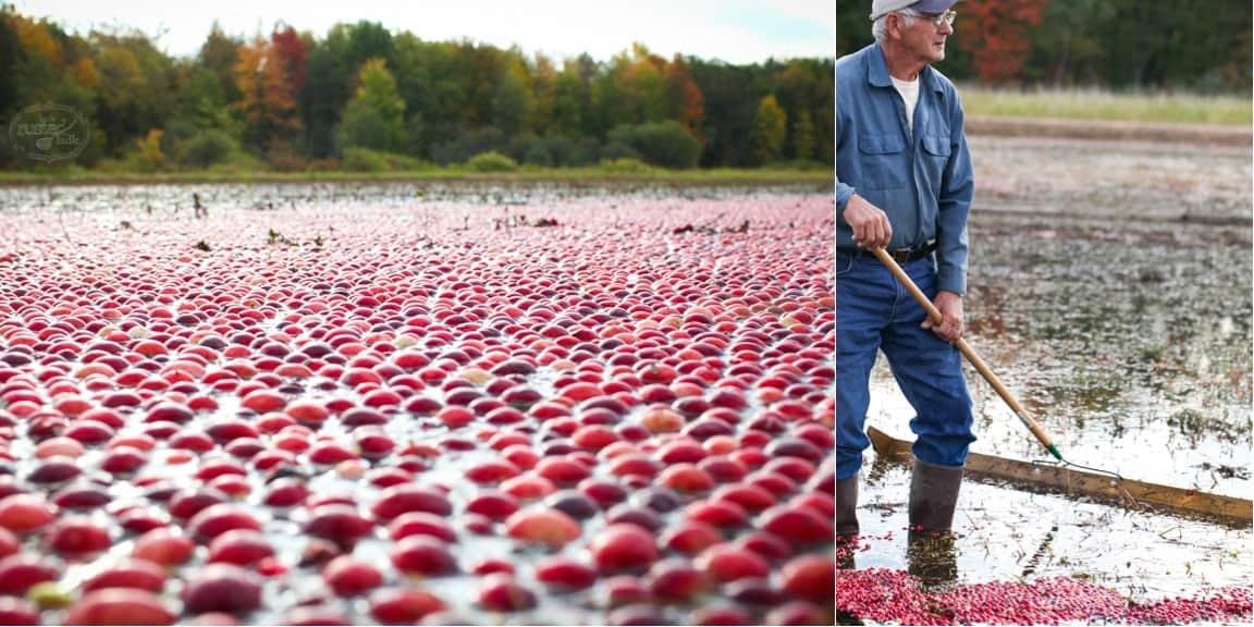 WI Cranberry Harvest & Fall Recipes | www.littlerustedladle.com