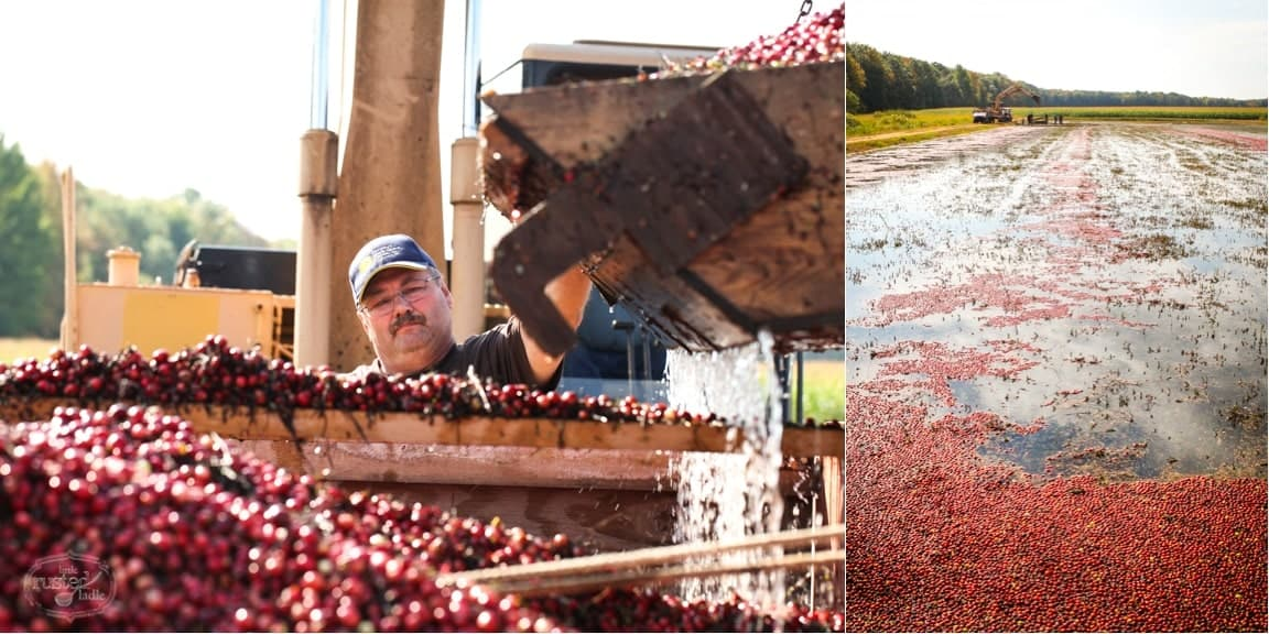 WI Cranberry Harvest & Fall Recipes | www.littlerustedladle.com