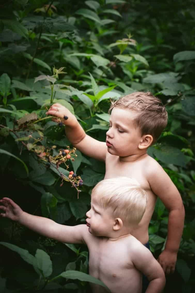 young boys picking wild blackberries