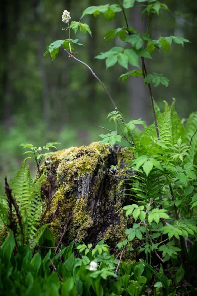 Mossy stump in a green forest.