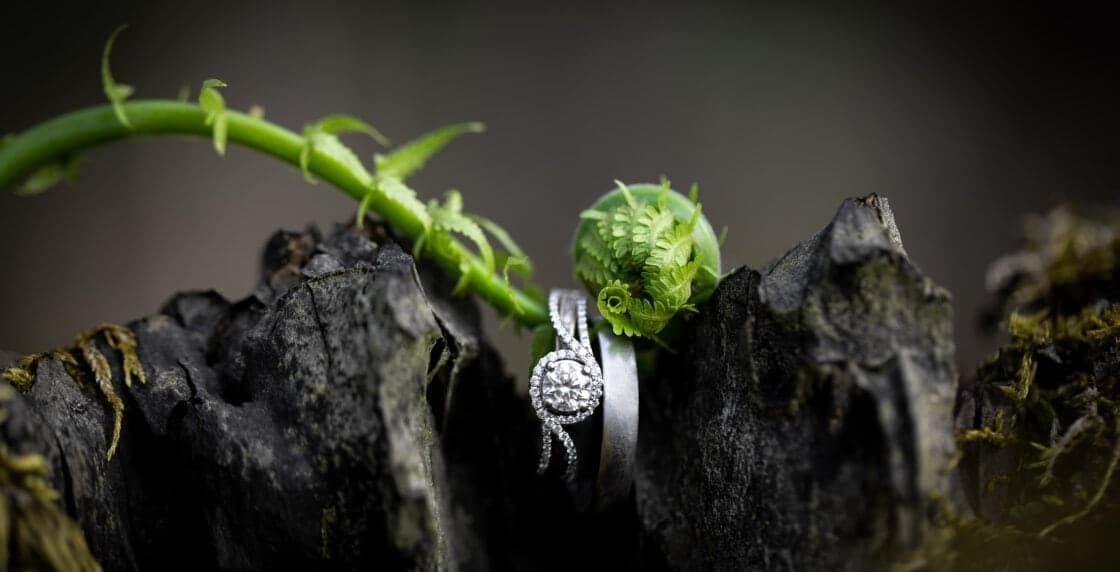 Two wedding rings on a baby fern resting on a stump.
