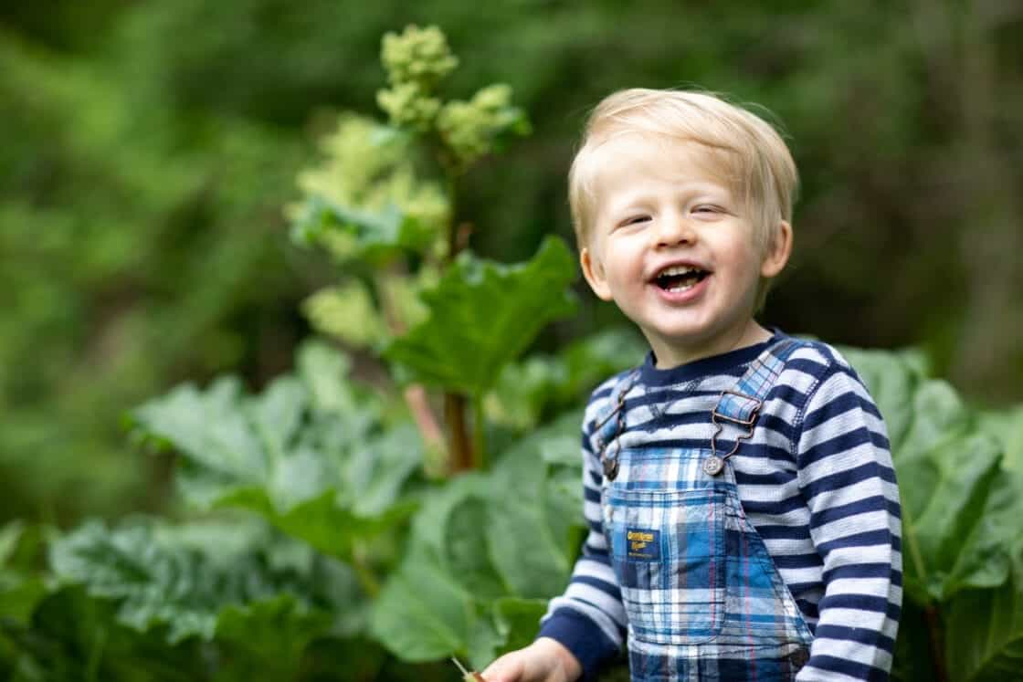 Little boy smiling in a rhubarb patch after biting into a stalk of rhubarb.