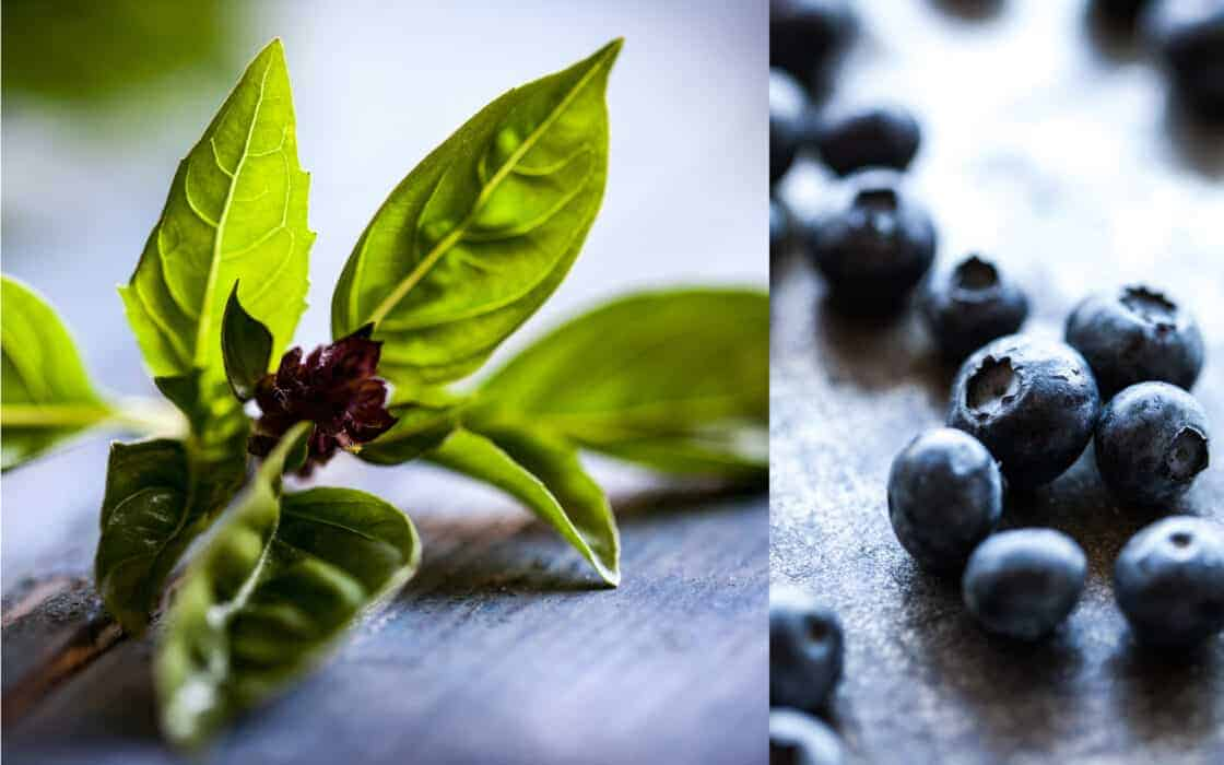 close up of basil and blueberries
