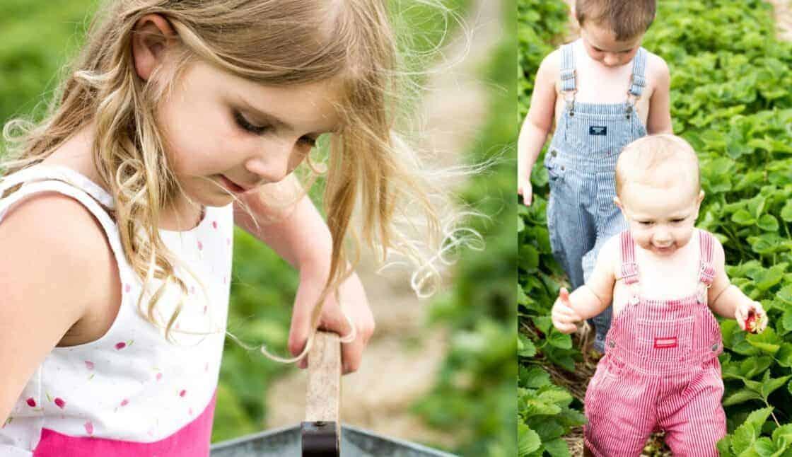 little kids picking strawberries