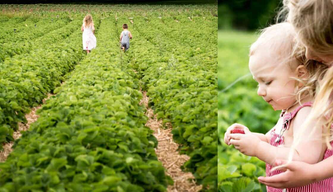 Two children walking down farm rows and experiencing the farm
