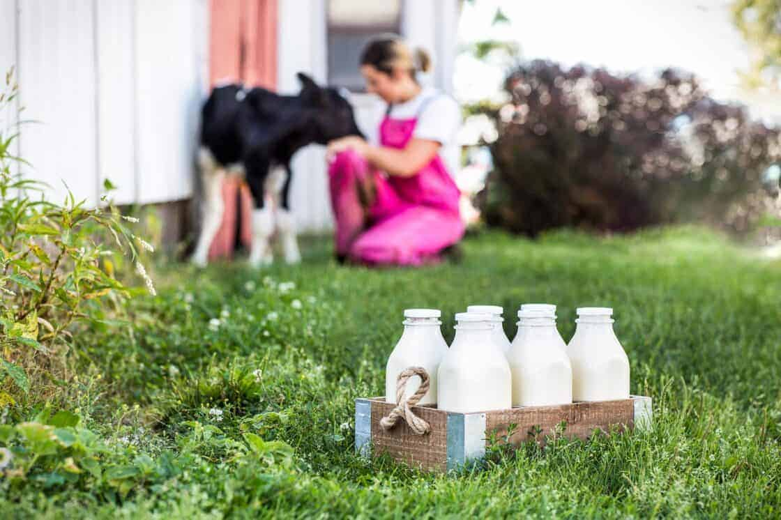 Bottles of milk in farm grass with a baby cow and female farmer in the background