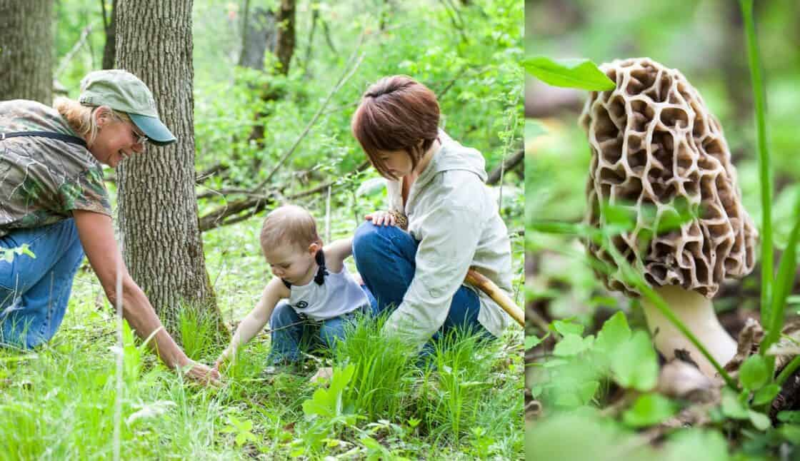 Three generations of women picking morel mushrooms in a forest and close up of morel mushroom