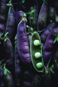 Purple snow pease wiht one open and the green peas showing